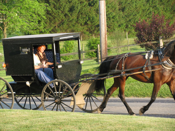 Wanda taking a ride in Amish friend's buggy.