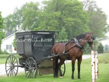 Horse and buggy at hitching rail