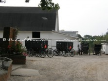 Amish Gathering