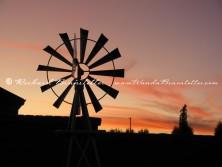 Amish Memories