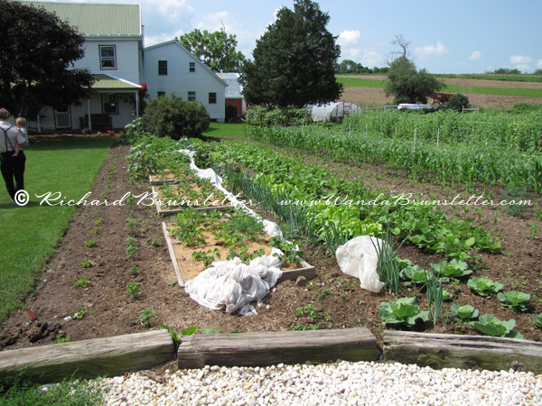 Amish Vegetable Garden Wanda Brunstetter