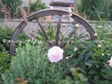 Amish flower garden 2