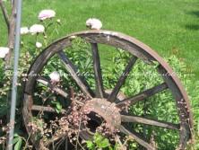 Amish flower garden 4