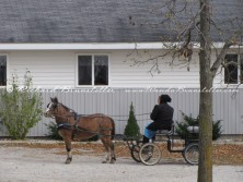 Amish woman in her pony cart