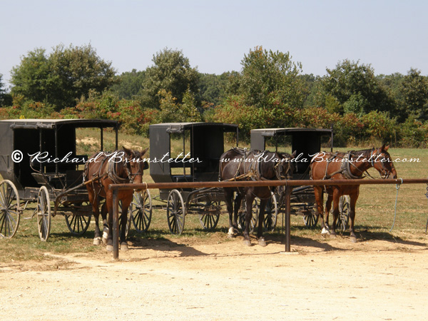 Buggies in Ethridge, TN