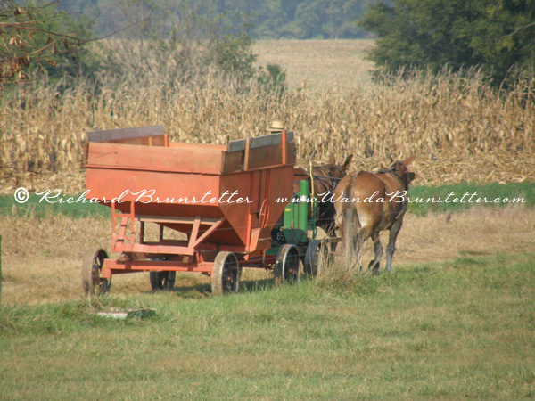 Kentucky Corn Picker