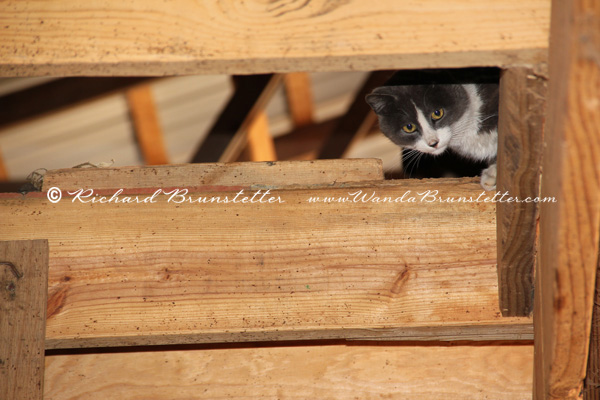 Peeking Down From the Hayloft