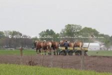 Preparing-the-Fields