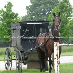 Horse and closed buggy