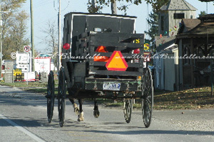 Amish Shopping Buggy