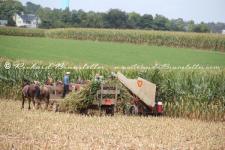 Bring the Corn